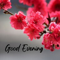 good-evening-with-pin-blossom-flower