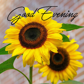 good-evening-with-sunflower
