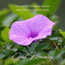 good-morning-purple-petal-flower