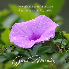 good-morning-purple-petal-flower