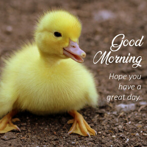 good-morning-message-cute-duckling
