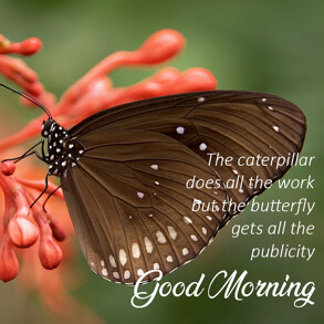 good-morning-quote-butterfly