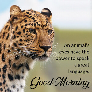 good-morning-quote-leopard