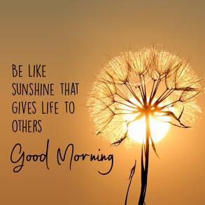 good-morning-wish-with-Dandelione-flower