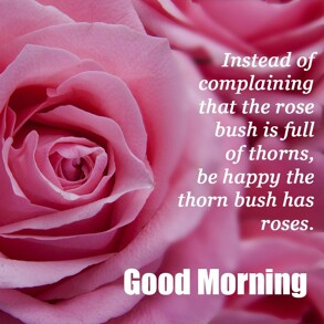 good-morning-wish-with-pink-rose-flower