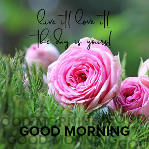 good-morning-wish-with-pink-roses