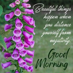 good-morning-wish-with-purple-bell-flower