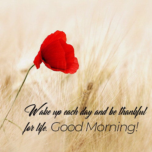 good-morning-wish-with-red-flower-in-field