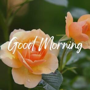 good-morning-wish-with-orange-rose-flowers