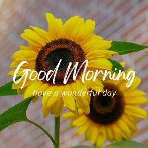 good-morning-wish-with-sun-flower