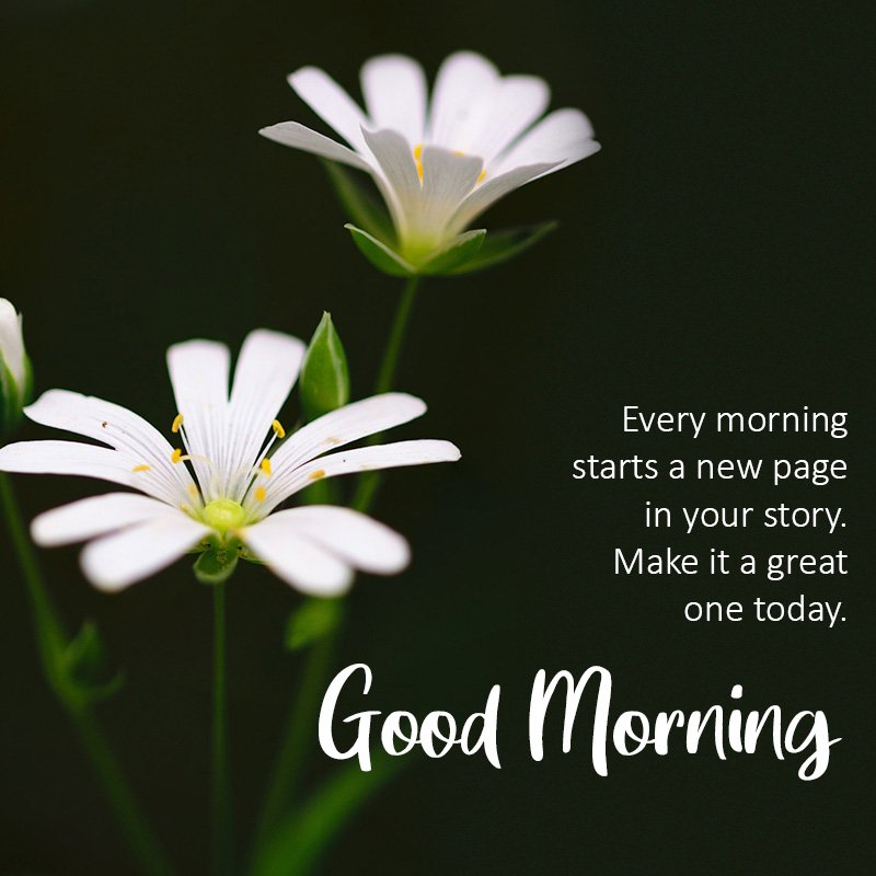 good-morning-wish-with-white-flower