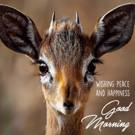 Good morning message with animal Antelope