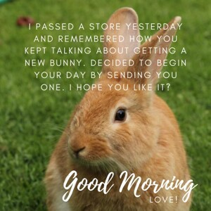 good-morning-with-cute-bunny-rabbit