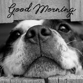Good morning Image with Dog