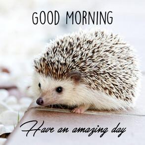 Good morning Image with Hedgehog