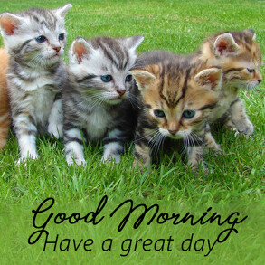 Good morning wish with cute kittens