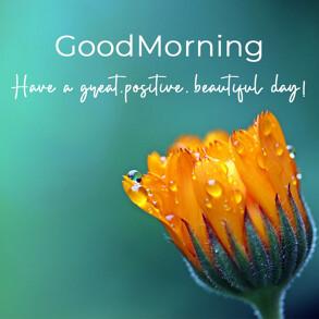 good-morning-wish-with-orange-flower