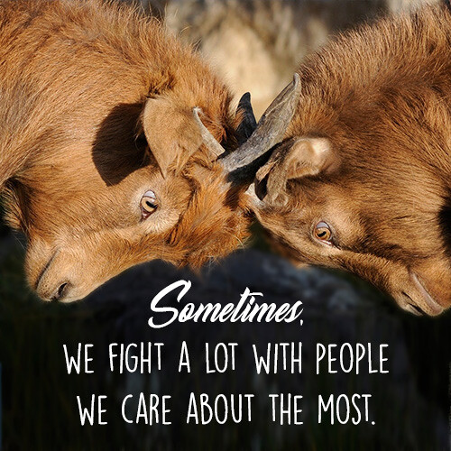 beautiful-short-quote-about-fight-with-animals-pic