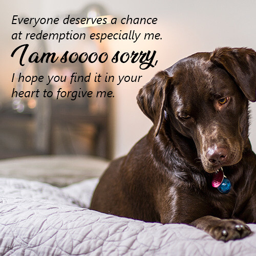 everyone-deserves-a-chance-sorry-message