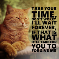 forgive-me-message-with-cat