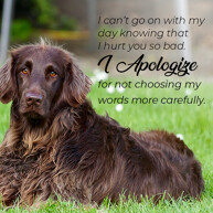 hurt-you-so-bad-apology-message