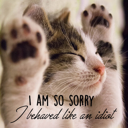 i-am-so-sorry-image-with-cute-cat