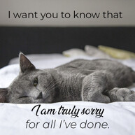 i-am-truly-sorry-message-with-black-sad-cat