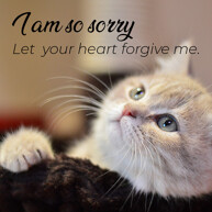 let-your-heart-forgive-me-cat