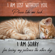 lost-without-you-sorry-message-with-sleeping-cat