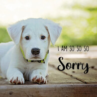 so-sorry-message-with-cute-white-sad-dog