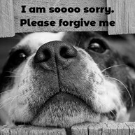 so-sorry-message-with-sad-dog