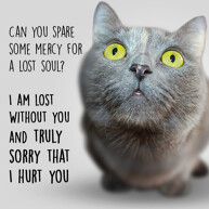 sorry-i-hurt-you-message-with-funny-cat