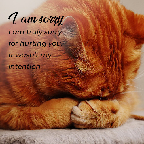 sorry-message-with-cat