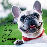 sorry-message-with-french-bulldog