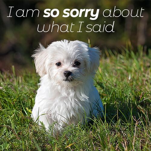 sorry-message-with-Pomeranian-dog