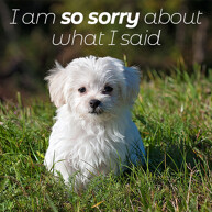 sorry-message-with-Pomeranian-dog