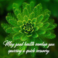 speedy recovery message green plant