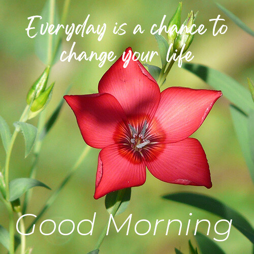 good-morning-wish-with-red-flower