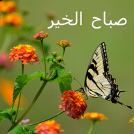 Good Morning Wish Image in different languages- Arabic