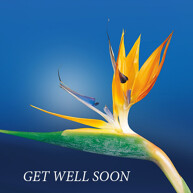 get well soon picture message with flower