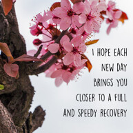 speedy recovery message with pink flowers